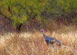 Wild Turkey 72278