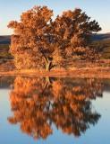 Tree At Sunrise 20071118