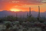 Desert Sunset 74319