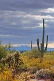 Desert Scene 74474