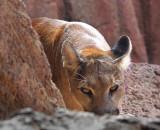 Sonoran Desert Animals Gallery - Tucson Region