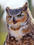 Great Horned Owl Lunch Gallery (Not for the squeamish or mouse-lovers)