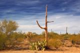 Desert Scene 74905