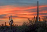 Desert Sunrise 74996