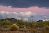 Desert Dusk 75536