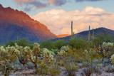 Desert At Sunset 75526