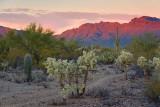 Desert Sunset 20071205