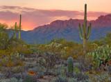 Desert Sunset 75906
