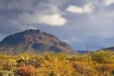 Desert Scene 76386