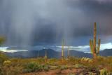 Desert Rain 76757