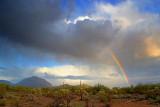 Desert Storm 76738
