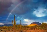 Desert Rainbow 76477