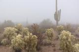 Desert Fog 76919