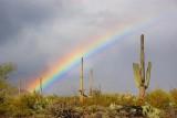Desert Rainbow 76831