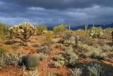 Desert Scene 76369
