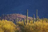 Desert Scene 77425