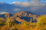 Desert Scene 75499