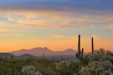 Desert Sunrise 86735