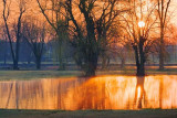 Sunrise At The Pond 87701