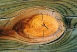 Wood Knot 73004