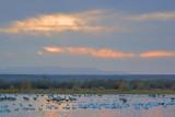 Cloudy Bosque Daybreak 72953