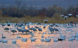 Bosque Roosting Pond 72954