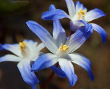 Blue & White Wildflowers 9344