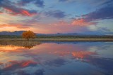 Bosque Sunset 73352