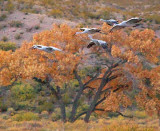 Incoming Cranes 72843