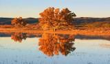 Tree At Sunrise 73842