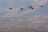 Cranes In Flight 73089