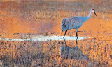 Sunrise Stroll 73905