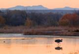 Lone Crane At Sunrise 73378