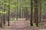 Jack Pine Trail 88784