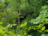 Gray's Arch Trail