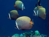 Peixes Maldivas