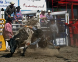 Whirling With the Bulls