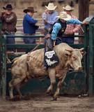 Bull Riding VI