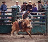 Bull Riding VII