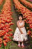 Tulip Tired