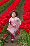 Tip-toe Through the Tulips