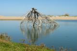 salt pond skeleton.jpg
