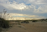 evening in the dune field.jpg