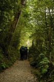 Hiking under the canopy of Beech Trees