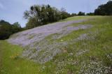 A Cascade of Wildflowers