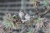 A crowded nest