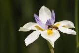 Bee Stop