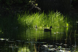 Spot of Light at the Pond