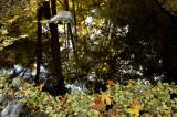 Fall at Stevens Creek