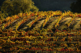 Fall Colors at the Vineyards
